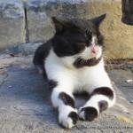 ギリシャ:ロドス島】猫の写真集