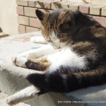 ギリシャ:アテネ】猫の写真集